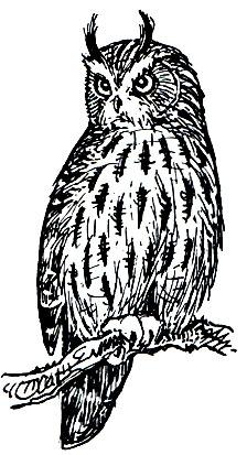 Owl chicks  Owls